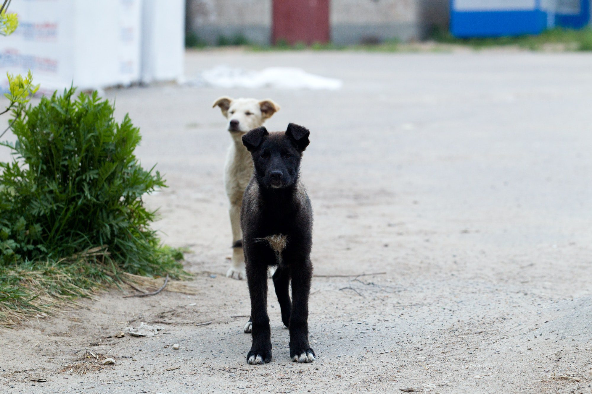 Small puppies of stray dogs